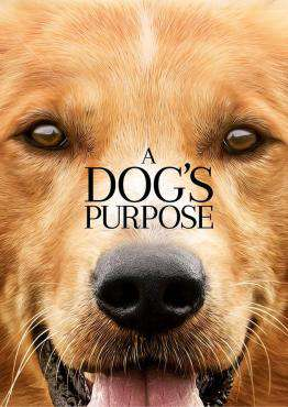 A Dog's Purpose, Movie on DVD, Family Movies, new movies, new movies on DVD