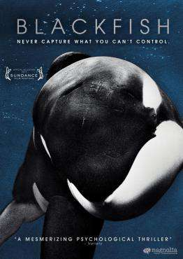 Blackfish, Movie on DVD, Drama Movies, Documentary & Special Interest Movies, ,  on DVD