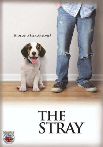 The Stray, Movie on DVD, Comedy Movies, Family Movies, Kids