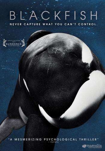Blackfish, Movie on DVD, Drama Movies, Documentary & Special Interest