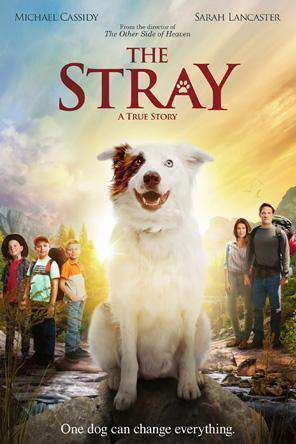 The Stray (2017), Movie on DVD, Drama